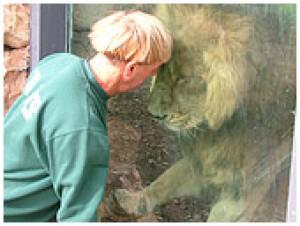 Lion in Zion